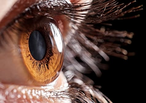 Close up of eye from side
